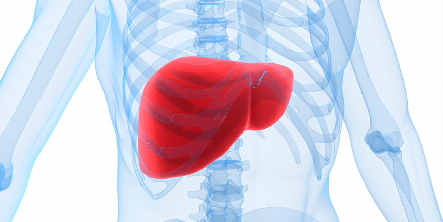 New Genes Discovered To Regulate The Level Of Unhealthy Fatty Substances In The Liver